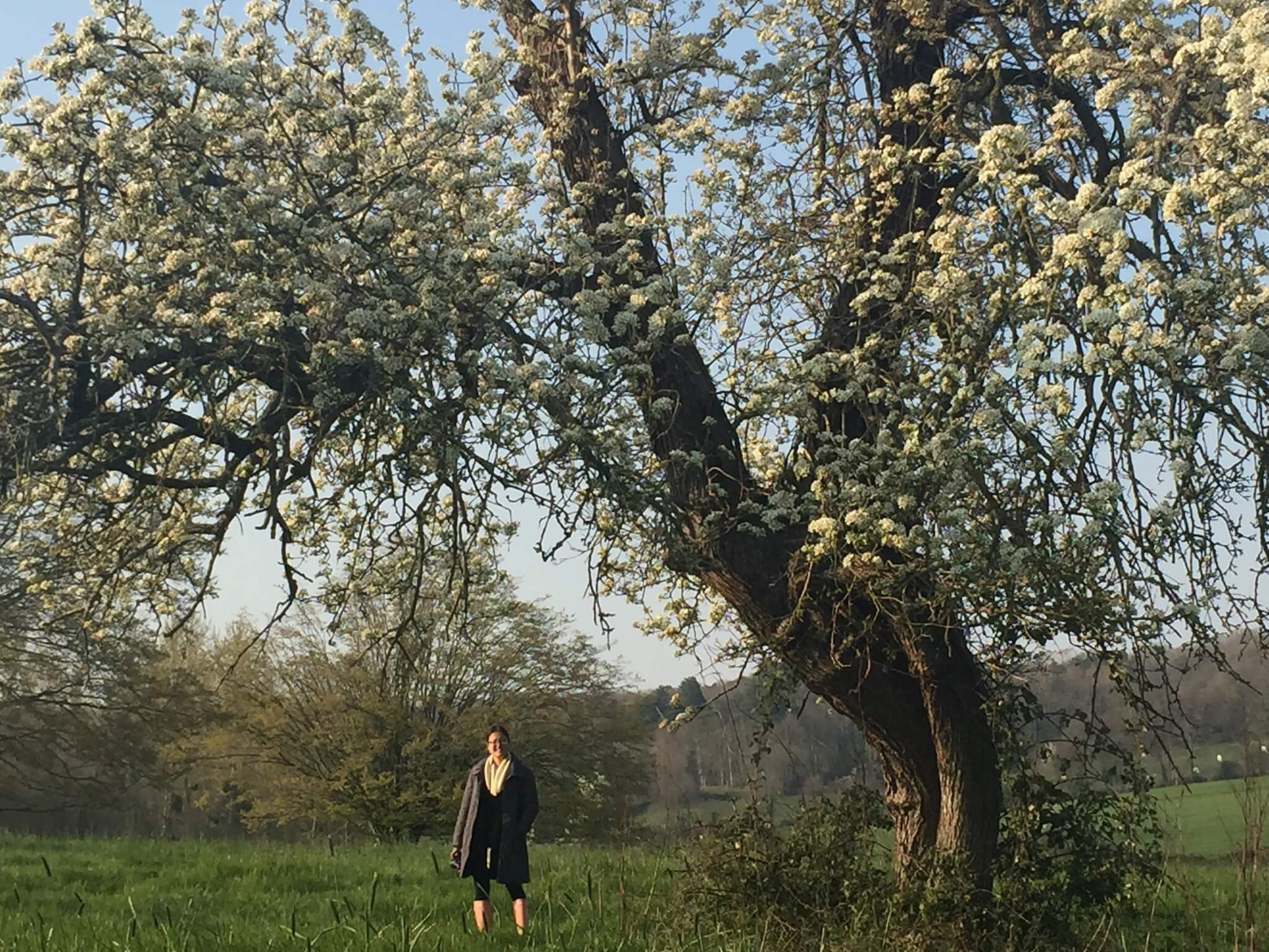 Marissa stands under a blossoming tree in the countryside of France.