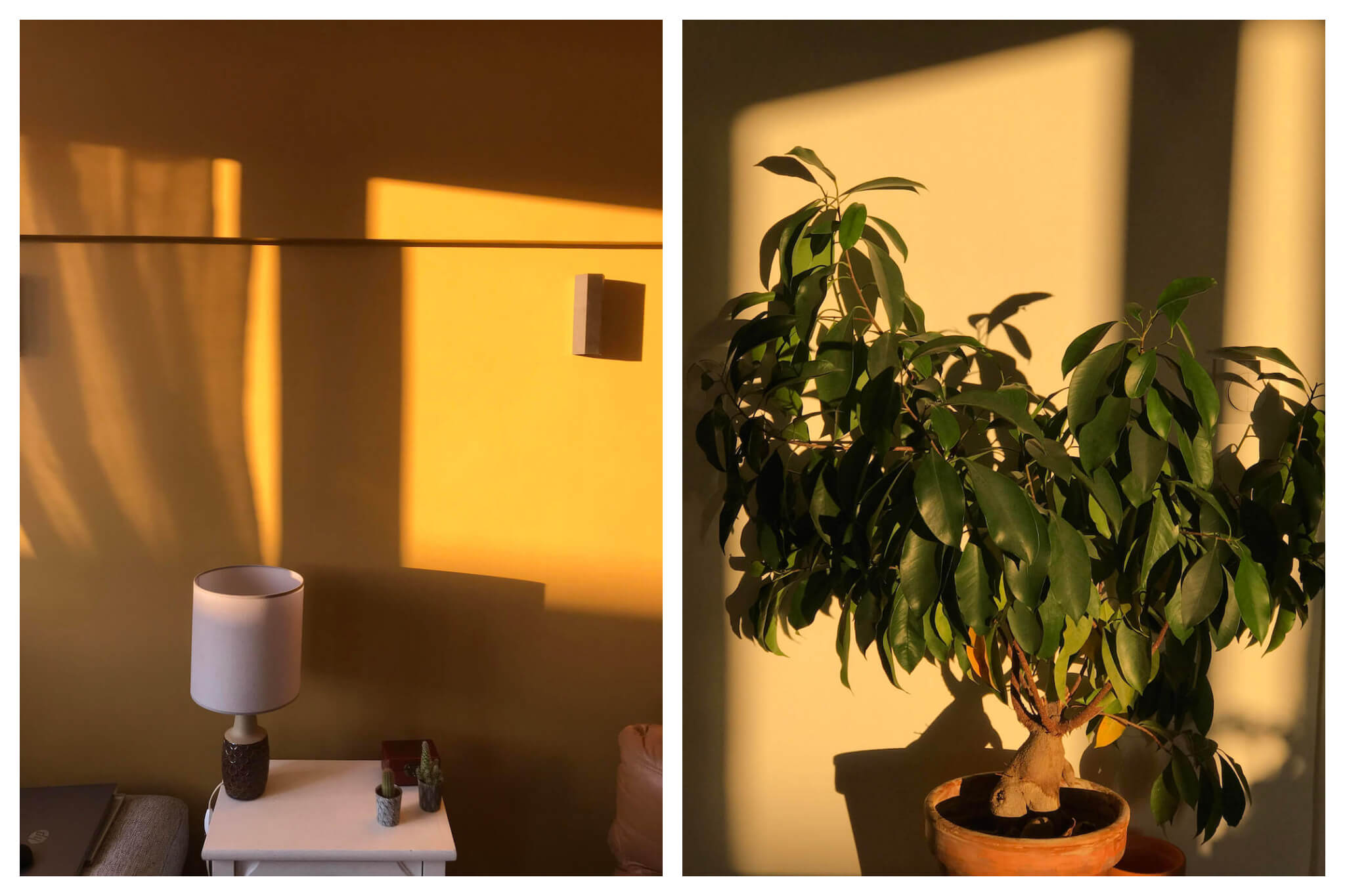 The sunshine casts a light on the walls and a plant in Rooksana's apartment.