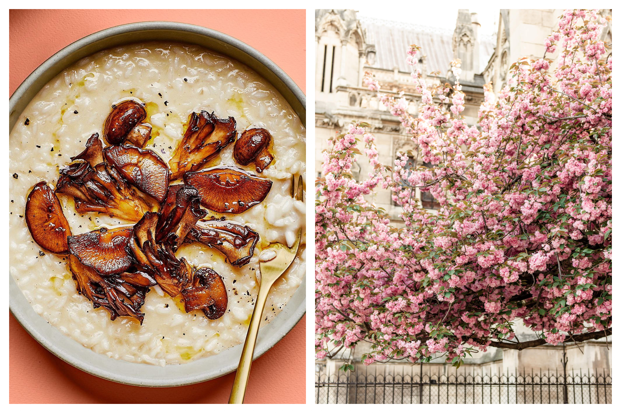 On left: A creamy mushroom risotto is perfect for the beginning of spring, when it's still chilly. On right: Fluffy cherry blossoms in full bloom by the Notre Dame Cathedral.