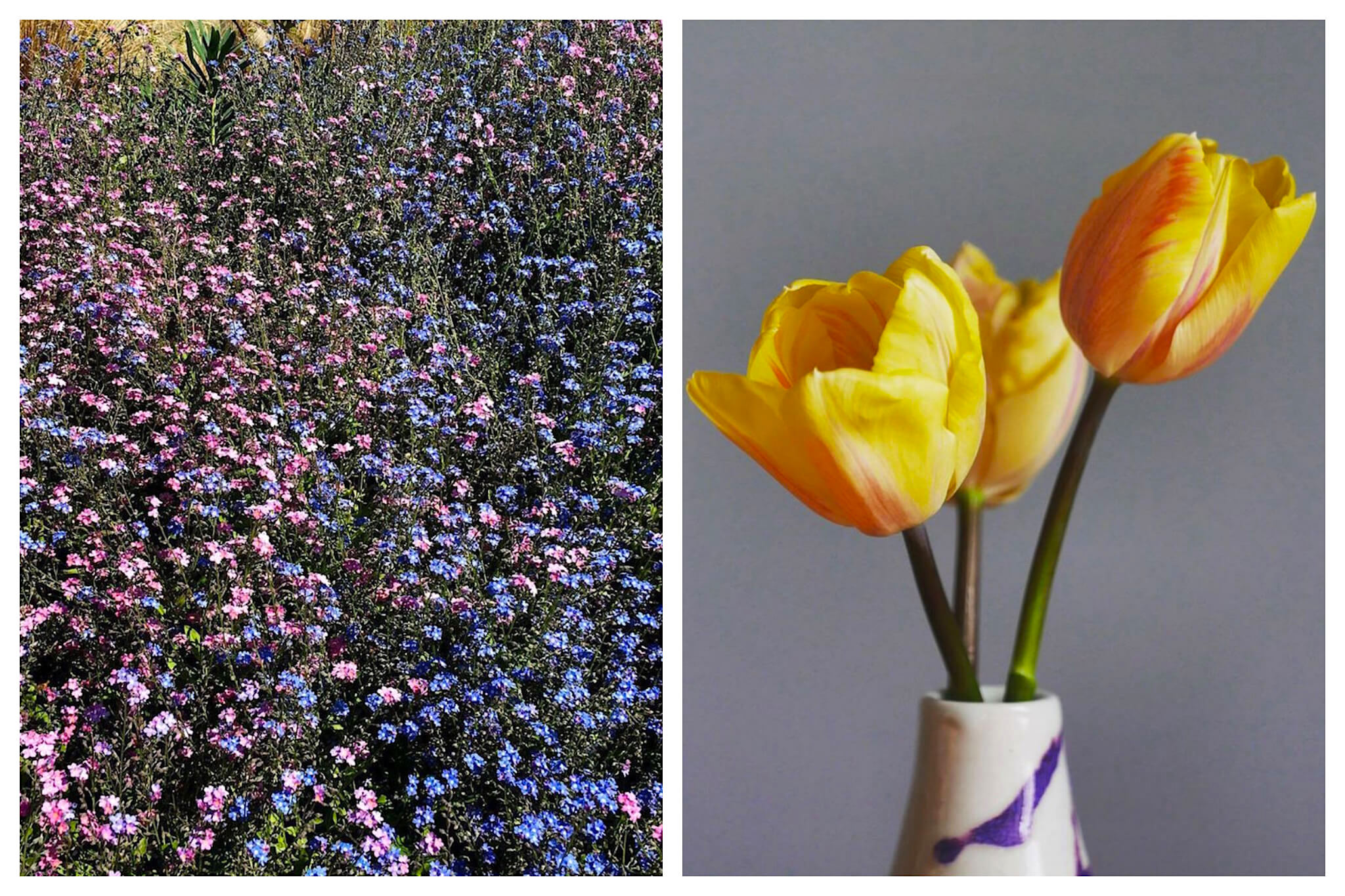 Left: A field of purple flowers grows in the spring at Ferme Florale, Right: A vase of bright yellow tulips from Ferme Florale.