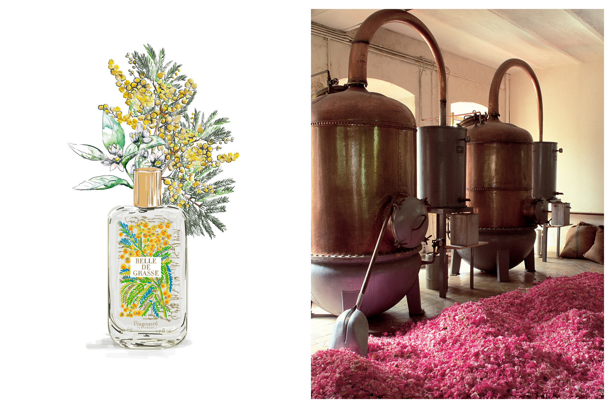 Left: Artwork of green and yellow lowers and a bottle of Fragonard's Belle de Grasse perfume, Right: Copper stills sit next to each other, ready to distill the large pile of pink rose petals in front of them