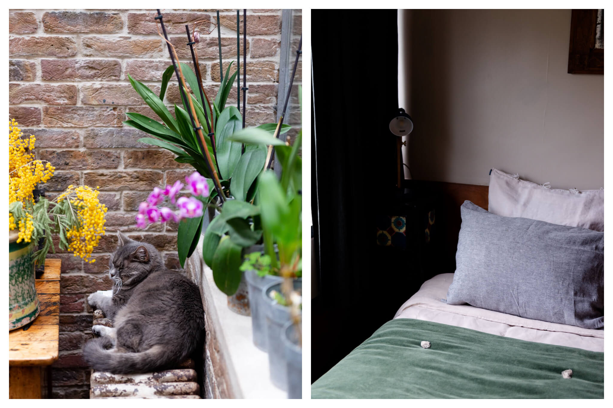 Left: A gray cat sits on a radiator surrounded by plants and flowers t Le 66 in Paris, Right: A close-up shot of a bed at Le 66 in Paris, decorated with pillows and  green blanket