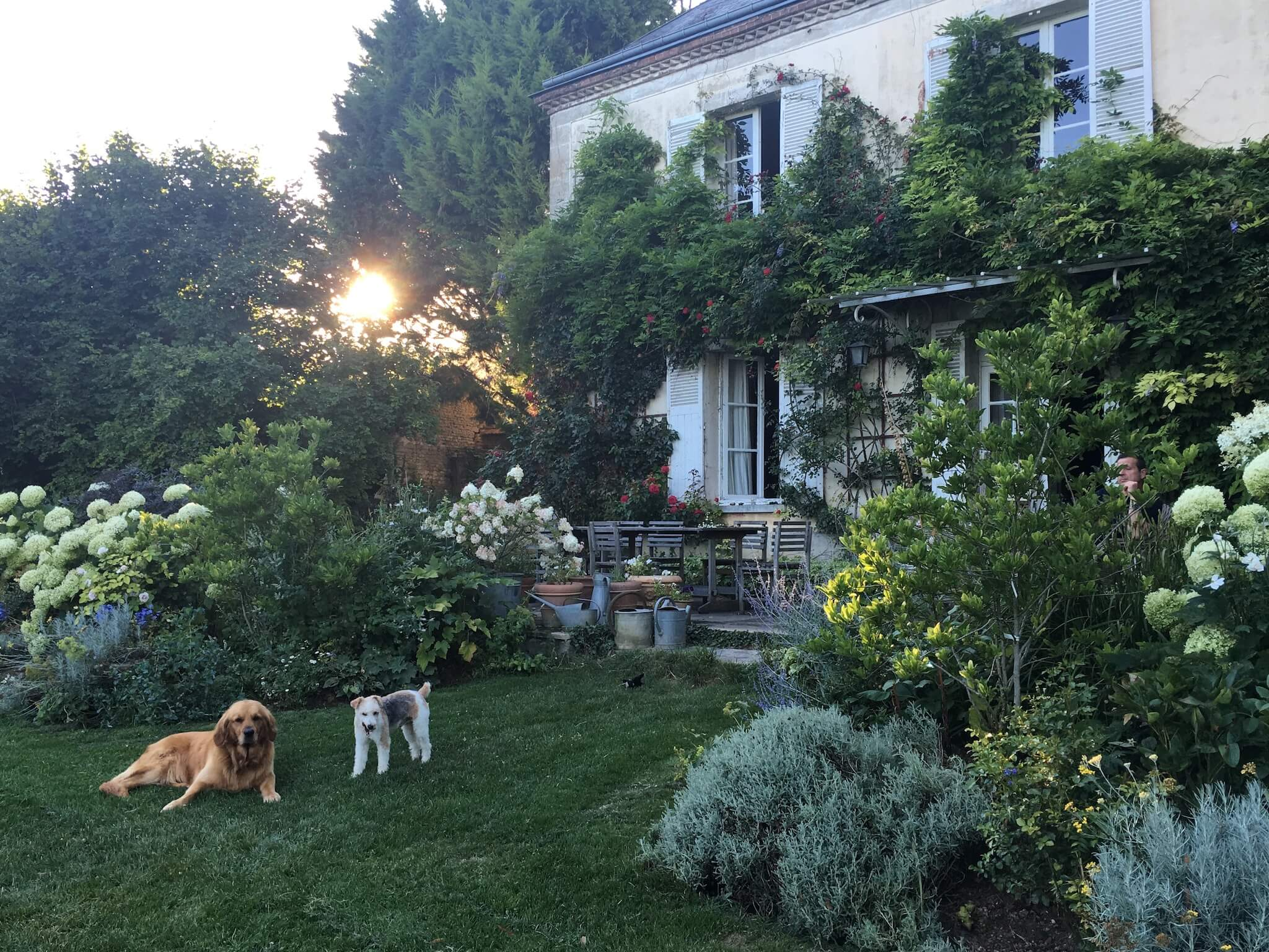 A French home covered in green leafy plants and two dogs in the gardens with the sun set behind.