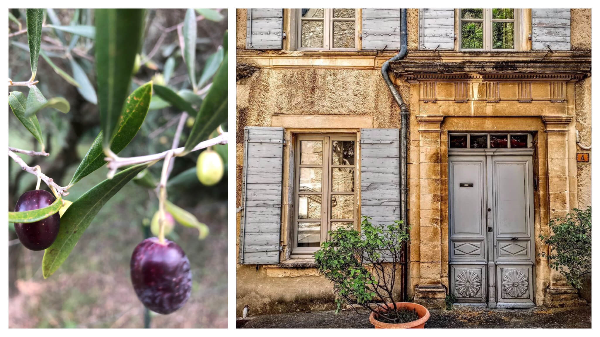 Left: a close up of olives on an olive tree. Right: the facade of a house in Vaison-la-Romaine.