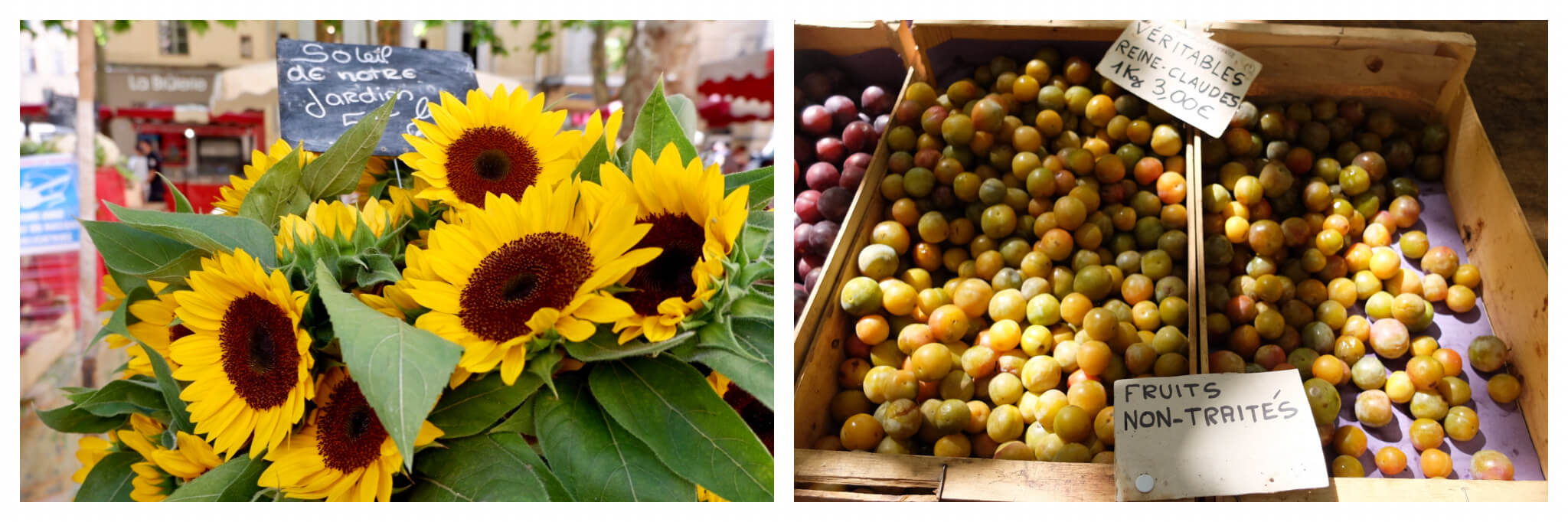 Left: sunflowers at a market in Provence. Right: reine-claude plums at a Provence market.