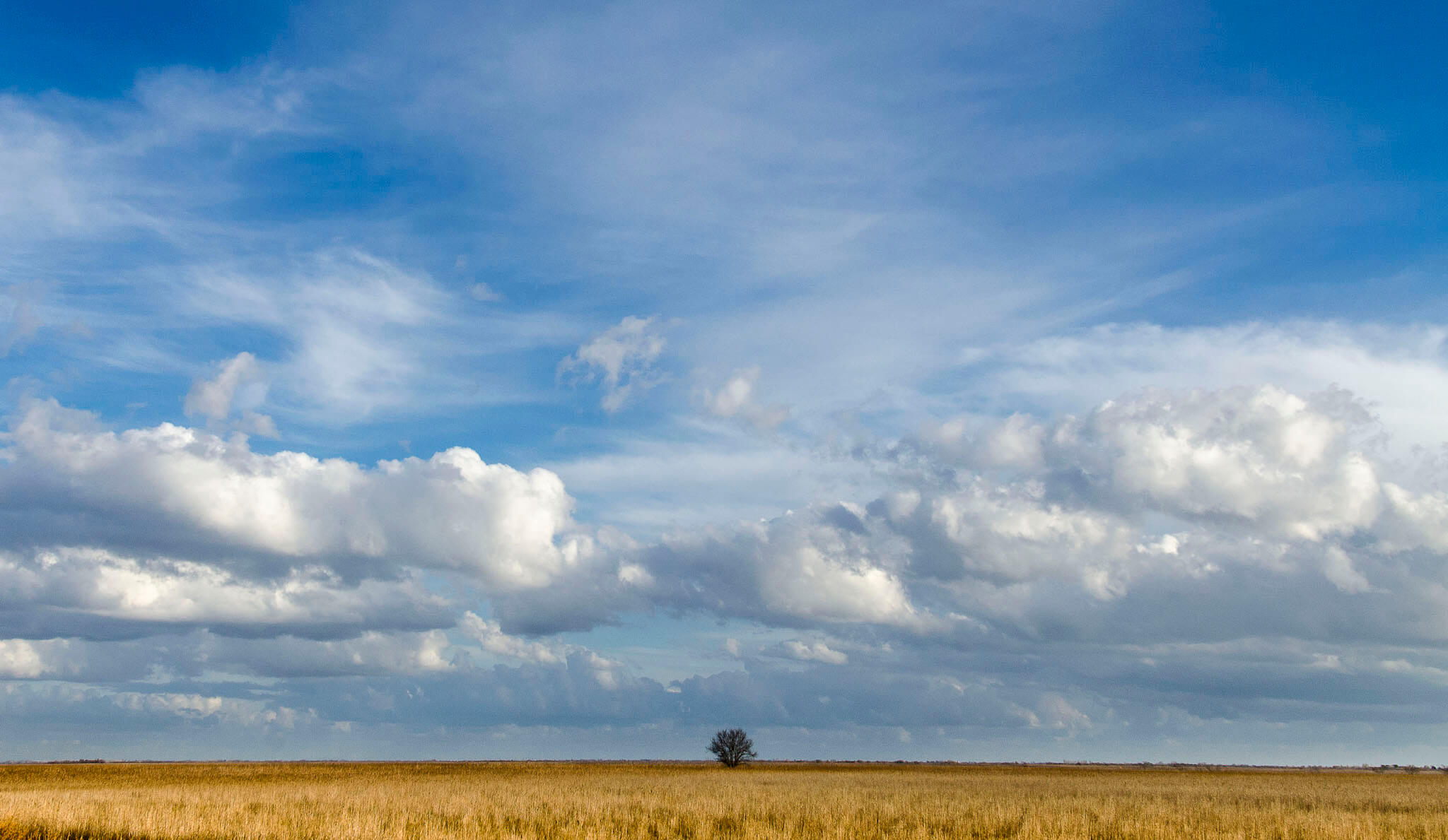 A lone tree is visible in the distance of a wheat colored field in the Camargue. There are low lying clouds against partially blue sky.